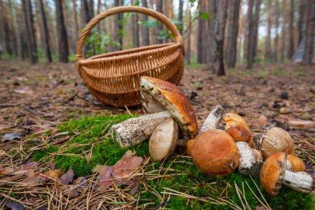 В Татарстане открыт грибной сезон, чем это может быть опасно? (ВИДЕО)