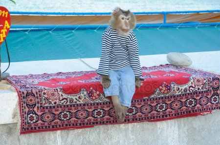 В Казани продают обезьянку для фото с Баумана