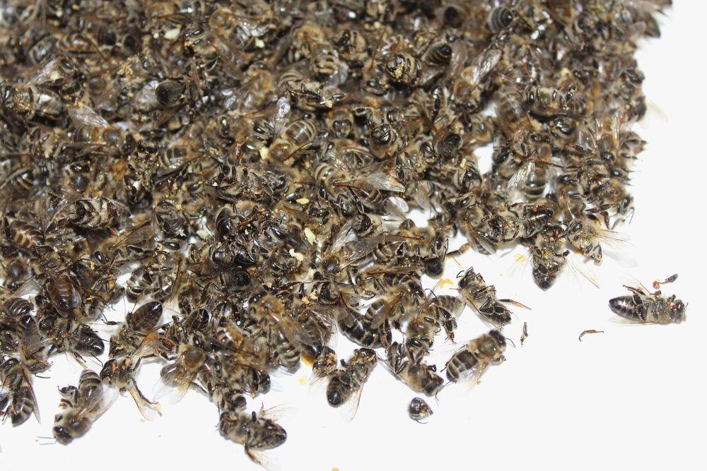 Свыше 6 миллионов рублей компенсации получат татарстанские пчеловоды (ВИДЕО)