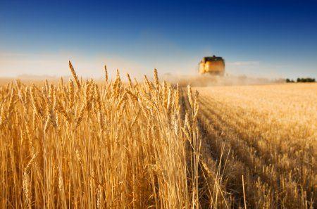 В Татарстане собрали 4,2 млн тонн зерна
