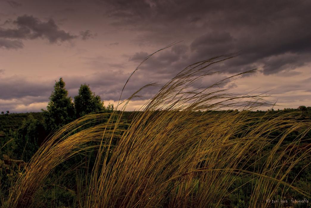 Погода в Татарстане: Неделя обещает быть ветреной