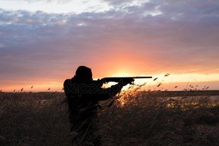 В Татарстане задержали браконьеров, застреливших двух кабанов