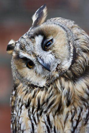 Казанцы спасли сову от стаи ворон (ВИДЕО)