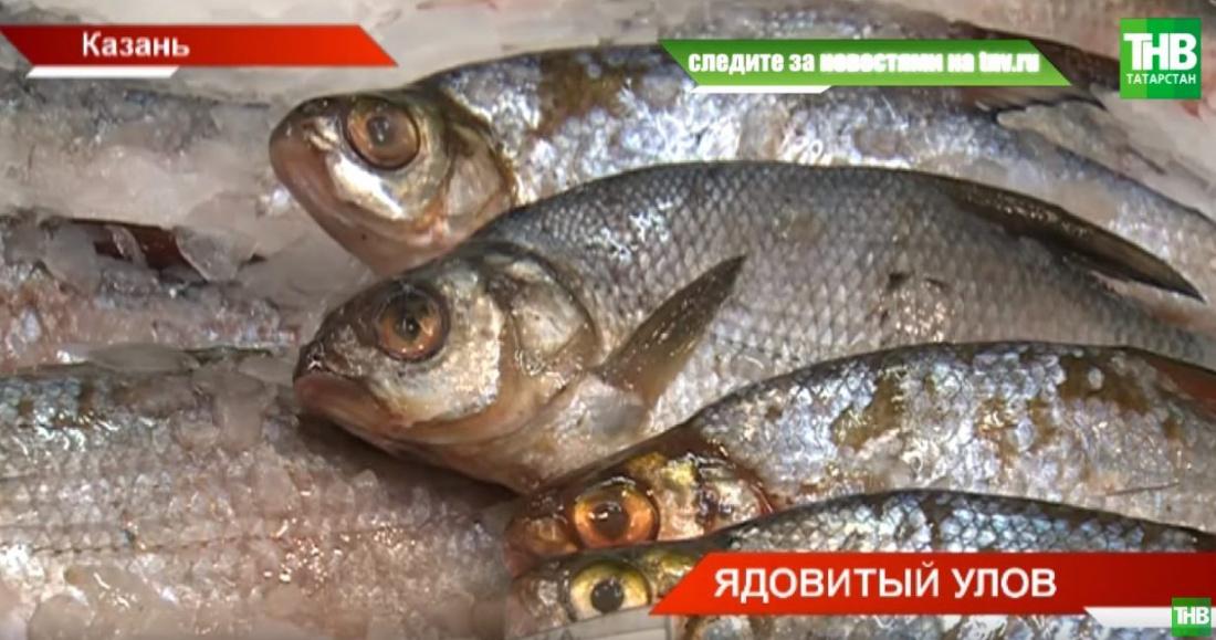 «Доплывет» ли ядовитая рыба из Тюмени в Татарстан? (ВИДЕО)