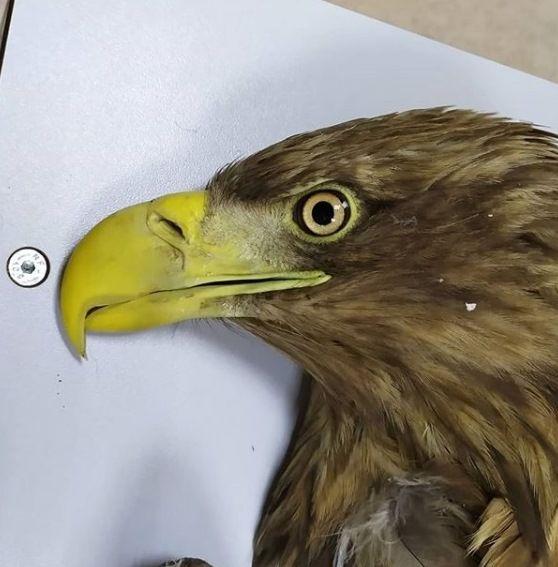 Солнечный орел из Татарстана долетел до Ирана