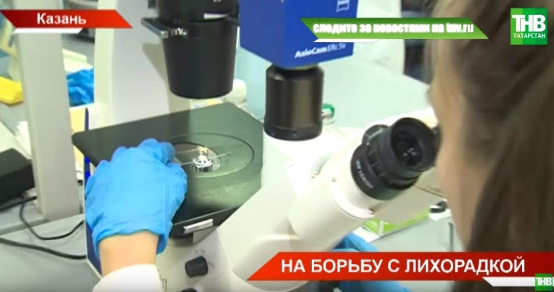 Казанские ученые разрабатывают генетические методы лечения мышиной лихорадки (ВИДЕО)