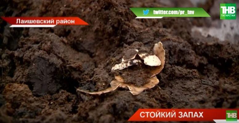 В Лаишевском районе Татарстана появилась долина куриного помета (ВИДЕО)