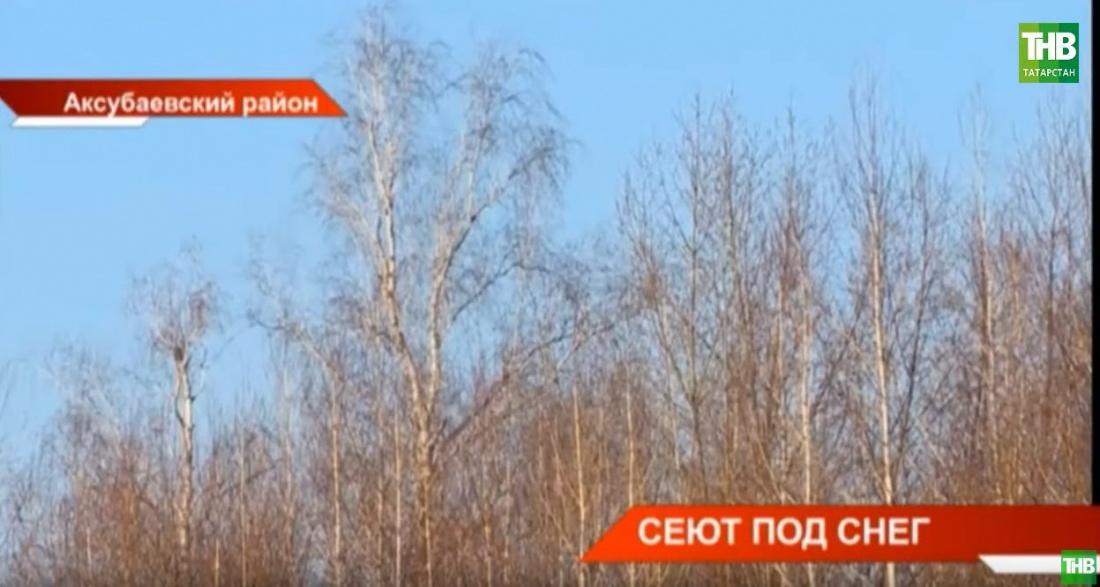 В Татарстане рассказали про уникальную технологию выращивания берез зимой (ВИДЕО)