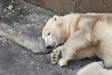 Из-за теплого января в Казанском зооботсаду проснулись медведи
