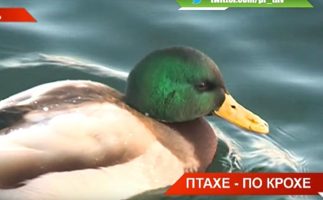 «Пернатые друзья»: в Татарстане зимует более 30 видов птиц