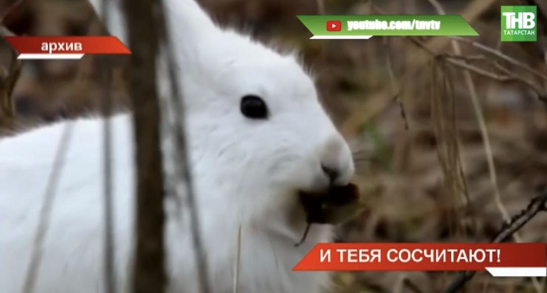 «По следам лосей, кабанов и лисиц»: в Татарстане ведётся лесная перепись (ВИДЕО)