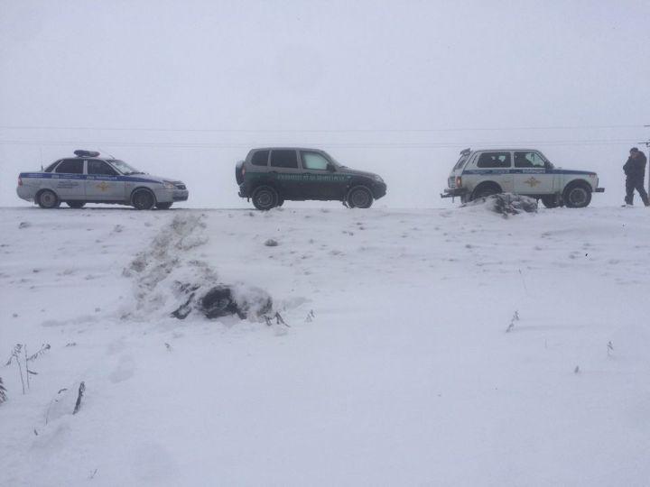 В Татарстане водитель сбил насмерть двух лосей