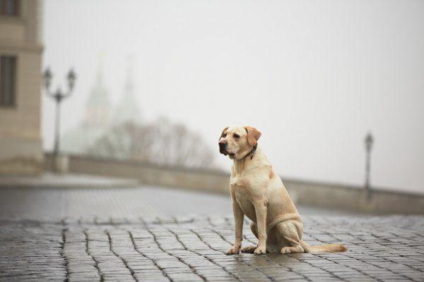 Что же будет с бездомными животными в Казани? (ВИДЕО)