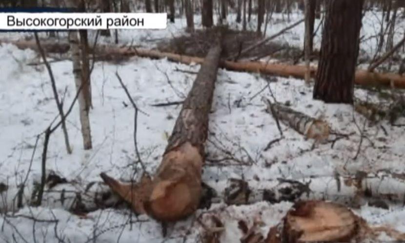 В Татарстане 54-летнему лесорубу размозжило голову упавшее дерево