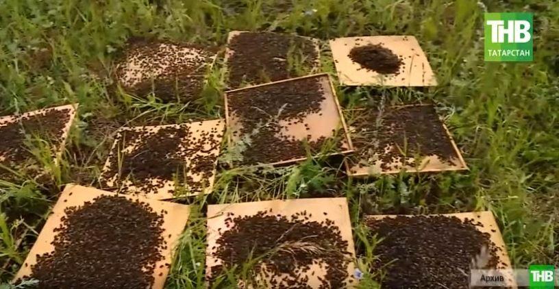 «Бороться до конца»: с какой целью пчеловоды создали общественную организацию? (ВИДЕО)
