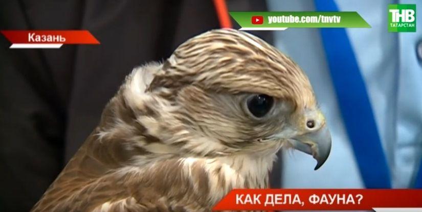 «Сплошная дичь»: в Татарстане растет численность лосей, маралов и косуль (ВИДЕО)
