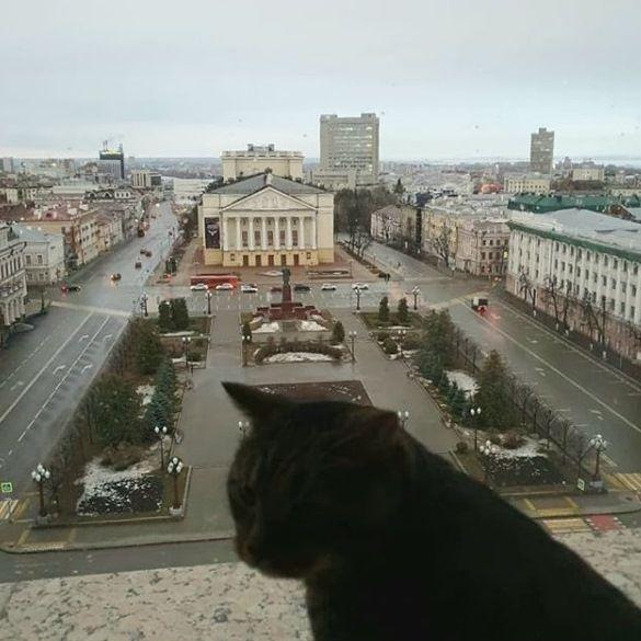 Кот Виктор оказался в Instagram Рустама Минниханова