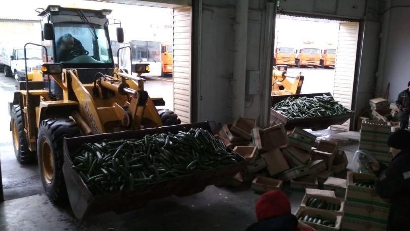 Из-за низкого спроса в Татарстане начали уничтожать излишки огурцов