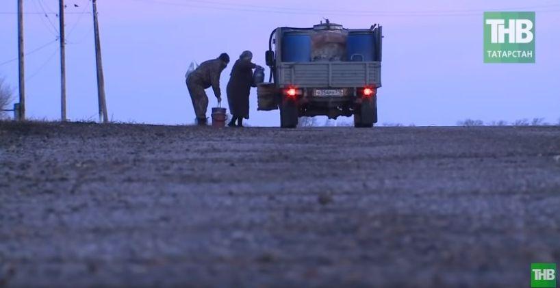 «Молочные войны»: В Алексеевском районе назревает скандал из-за сбора «белого золота» - видео