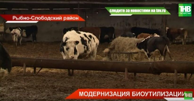 Как в Татарстане будут утилизировать останки животных? - видео