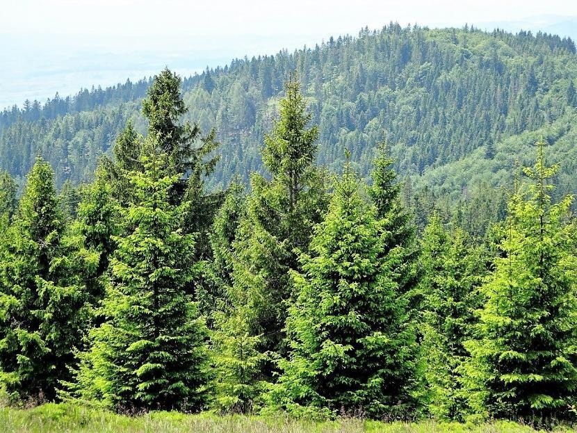 Благодаря нацпроекту в Татарстане восстановили более 2 500 гектаров леса