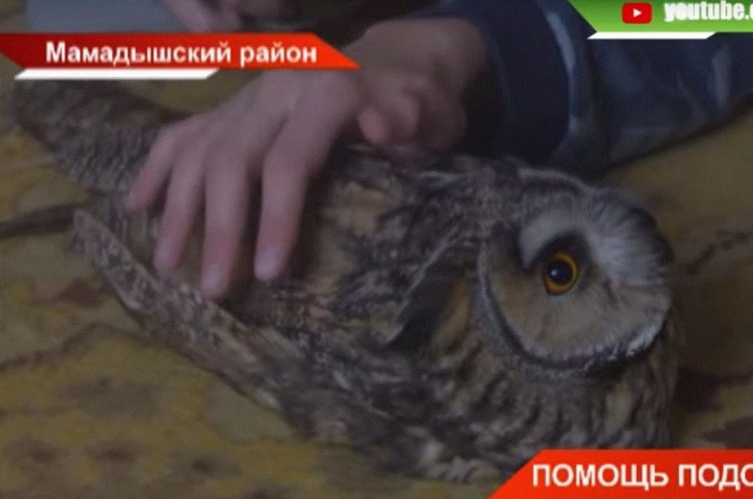 В Мамадышском районе Татарстана школьники спасли раненую сову