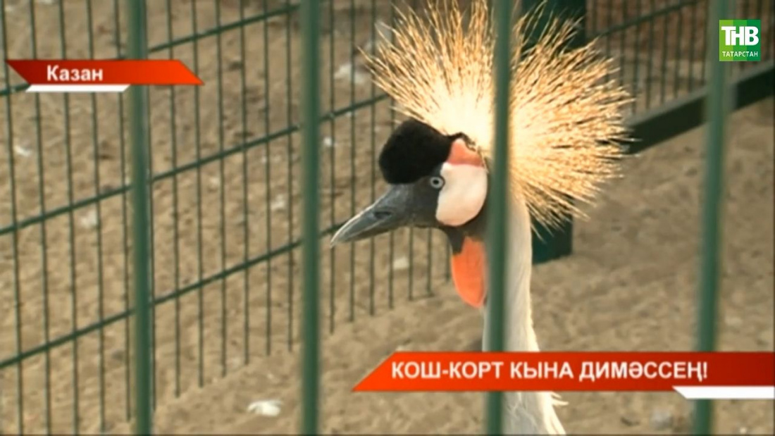 Казанның яңа зоопаркында яңа кошлар! Видео