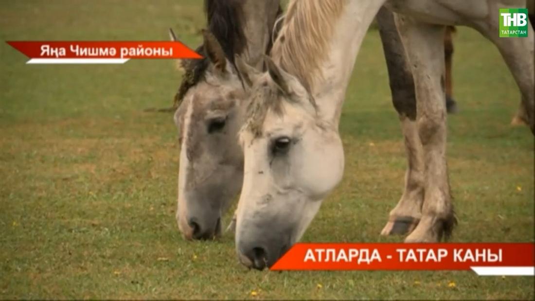 Татар атлары заводы оешуга 100 ел