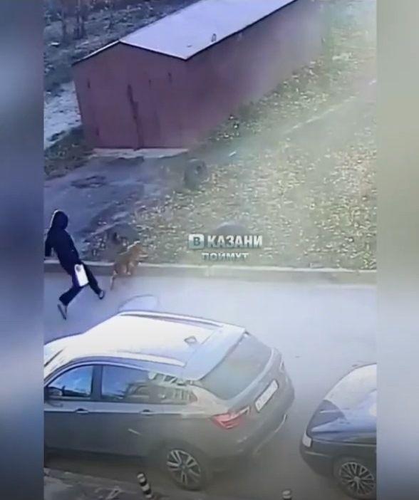 В Казани мужчина жестоко расправился с собакой - видео