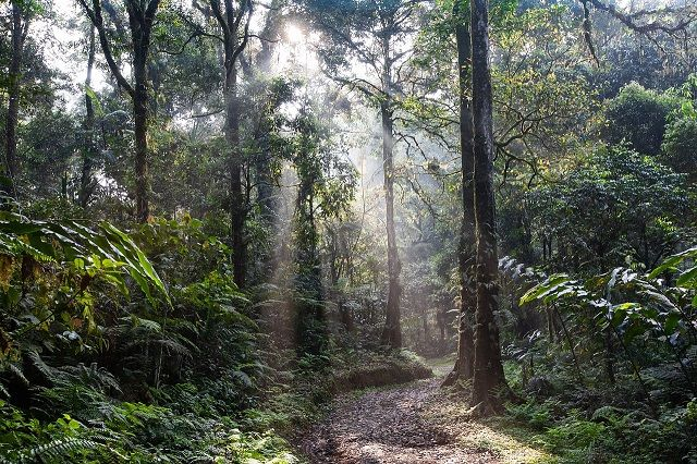 Начало появлению тропических лесов Амазонки дал убивший динозавров астероид
