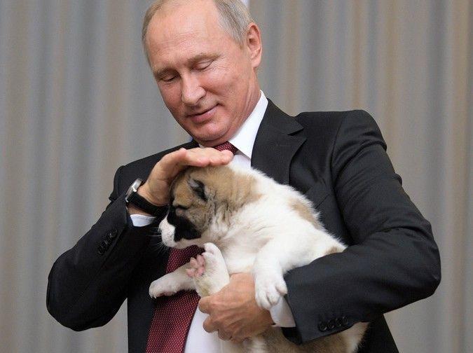 Путин поручил правительству создать законопроект об учете домашних животных