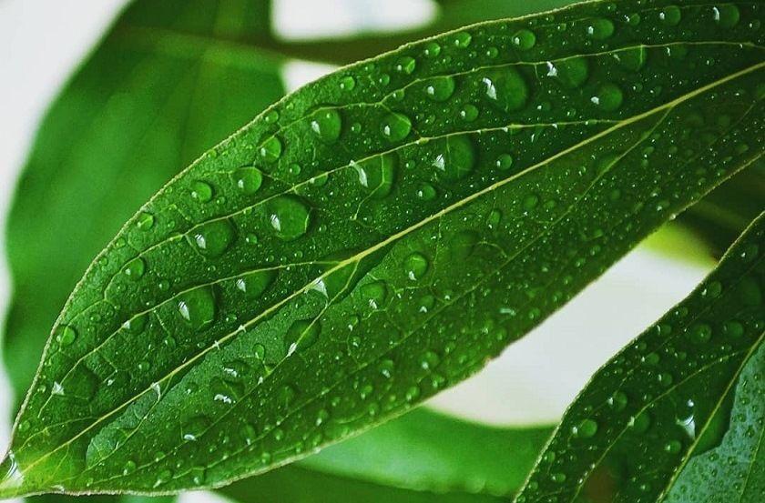 Жителей Татарстана предупредили о грозе и кратковременных дождях в среду