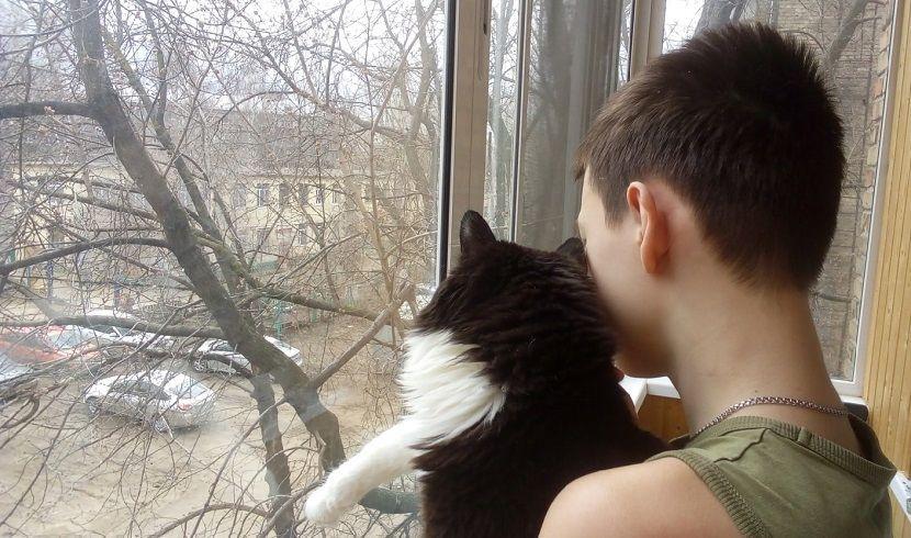 Госсовет Татарстана одобрил законопроект об обязательной регистрации кошек и собак