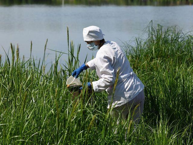 В Казани на 44 водоемах произвели противомалярийную обработку