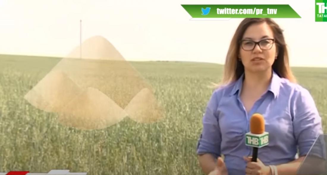 Татарстан кырларында 2021нче елның уңышын саклап калу өчен чын көрәш бара