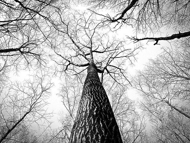 В Челнах около школы обнаружили висящий высоко на дереве труп