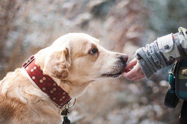 В казанском поселке Кадышево заработает пункт вакцинации и стерилизации собак