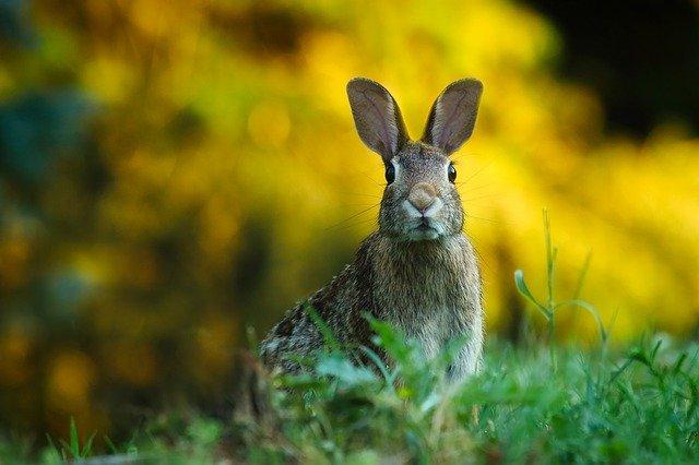 В Татарстане готовятся к открытию сезона охоты на зайца-русака
